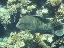 Free Angelfish Stock Image - 3223541