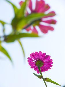 Free Flower Stock Photo - 3223930