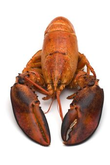 Free Lobster On White Background Royalty Free Stock Images - 3223939