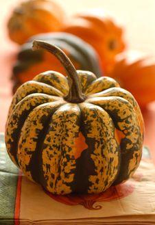 Free Several Colorful Pumpkins Stock Image - 3224381