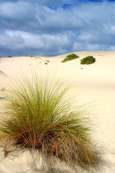 Among The Dunes Royalty Free Stock Photo