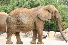Free Elephant Royalty Free Stock Images - 3225109