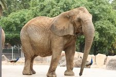 Free Elephant Stock Image - 3225111
