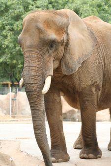 Free Elephant Portrait Stock Photo - 3225120