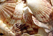 Free Shells Royalty Free Stock Photo - 3225135