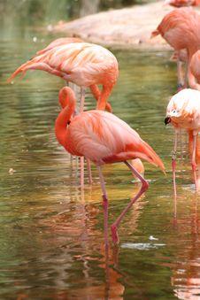 Free Flamingo Royalty Free Stock Images - 3225139