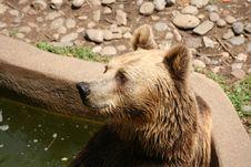 Nice Bear Royalty Free Stock Photos