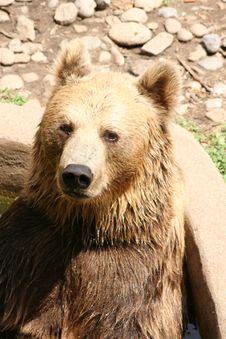 Free Bear Portrait Stock Photos - 3225223