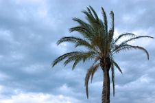Free Palm And Clouds Stock Photos - 3225673