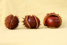 Free Autumn Chestnuts Royalty Free Stock Images - 3226219