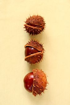 Free Autumn Chestnuts Royalty Free Stock Photo - 3226225