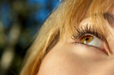 Free Girl S Eye Closeup Royalty Free Stock Photo - 3226825