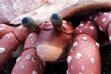 Free Hermit Crab Sculpture Stock Photo - 3227570