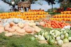 Free All Kinds Of Pumpkins Royalty Free Stock Image - 3227736