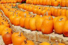 Terraces Of Pumpkins Stock Photography