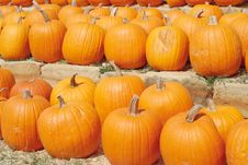 Free Pumpkins For Sale Royalty Free Stock Photography - 3227827