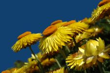 Free Yellow Flowers Stock Images - 3228414