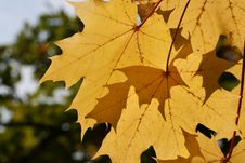 Free Autumn Leafs Royalty Free Stock Image - 3229376