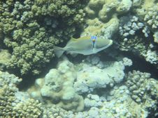 Free Coral Reef And Coralfishes Royalty Free Stock Photos - 3229508