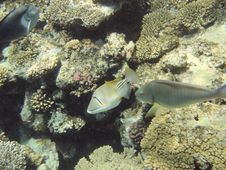 Free Coral Reef And Coralfishes Royalty Free Stock Images - 3229509