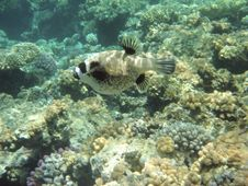 Free Coral Reef And Coralfishes Royalty Free Stock Photos - 3229518