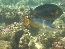 Free Coral Reef And Coralfishes Royalty Free Stock Photos - 3229548