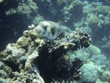 Free Coral Reef And Coralfishes Stock Images - 3229564