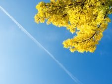 Free Fall Branch Ash Stock Photography - 3229772