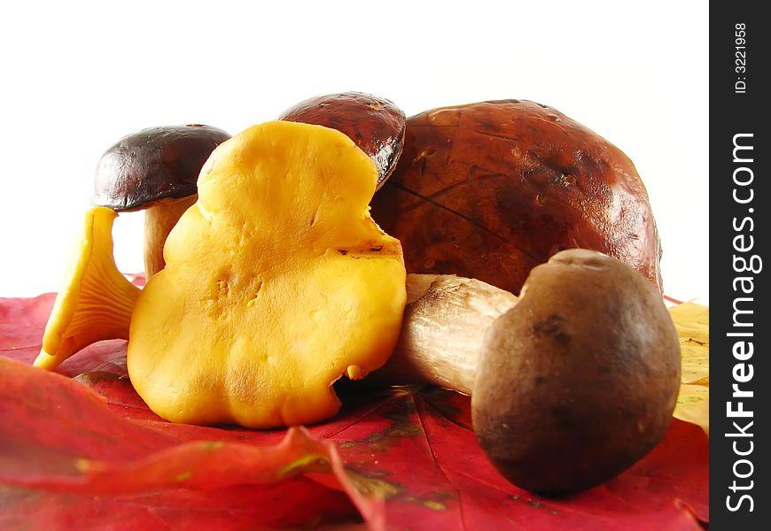 Mushrooms on lcolor eaves