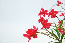 Free Red Flowers Royalty Free Stock Photography - 32208807
