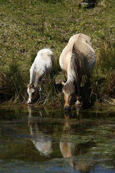 Free Mum & Baby Drinking Hole Stock Images - 32223244