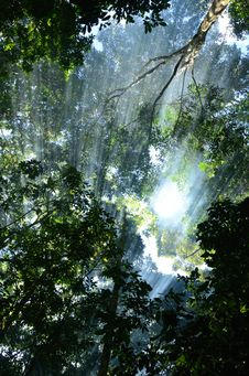 Free Sun Light In Forest Royalty Free Stock Images - 32225989