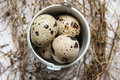 Free A Small Bucket With Quail Eggs Royalty Free Stock Image - 32239336