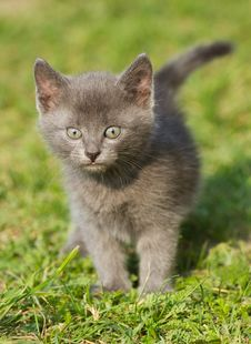 Free Baby Cat Stock Photography - 32231272
