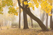 Free Mariinsky Foggy Park In Kiev Royalty Free Stock Image - 32231276