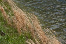 Dried Grass Royalty Free Stock Photos