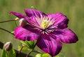 Free Violet. Royalty Free Stock Image - 32245166