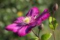 Free Violet. Stock Image - 32245241