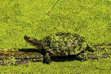 Free Turtle Stock Photos - 32244023