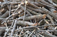 Free Wood, Silver Oak Tree Stock Photo - 32244360