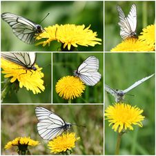 Free White Butterfly Collage Stock Image - 32246141