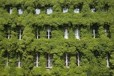 Free Leaf Covered Windows In Gdansk Stock Image - 32249601