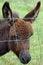 Free Miniture Donkey Stock Image - 32241581