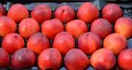 Free Nectarines Stock Photography - 32255482