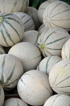 Free Melons Stock Image - 32255541