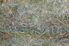Free Bale Of Hay Stock Image - 32259871