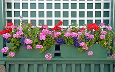 Free Geranium Planters Royalty Free Stock Photos - 32260168
