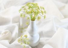 Free Dill Flowers Royalty Free Stock Images - 32261229