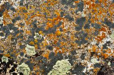 Free Rock Surface With Lichen And Moss Stock Photos - 32267953