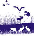 Free Storks On The Shore Stock Photo - 32274840